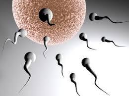 frecuencia de relaciones sexuales para quedar embarazada