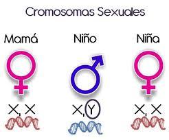 cromosomas x y para niña